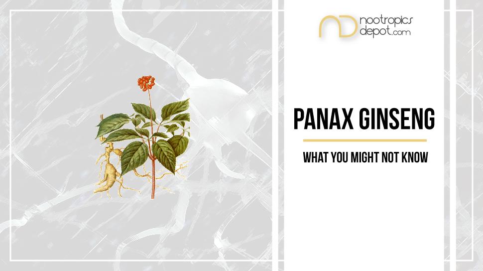 Panax Ginseng Blog
