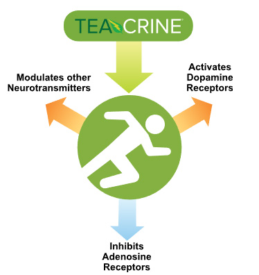 How Teacrine (Theacrine) Works
