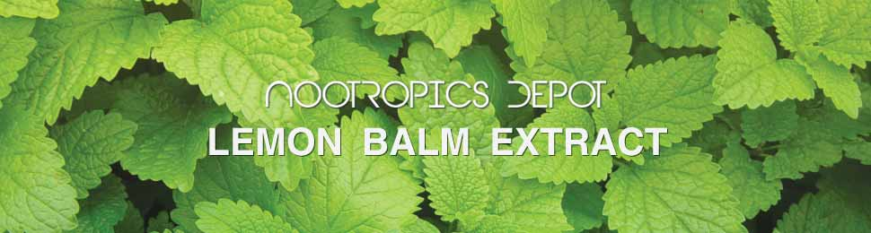 Buy Lemon Balm