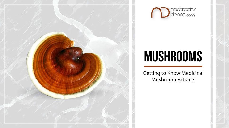 Ultimate Guide to Medicinal Mushrooms Blog