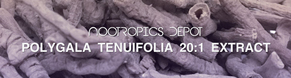 Buy Polygala Tenuifolia