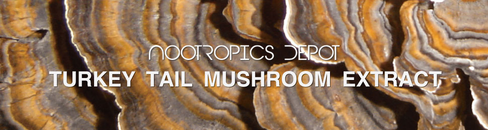 Buy Turkey Tail Mushroom Powder